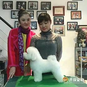 恭喜美丽的魏小姐成为比熊小宝贝的新主人【武汉贵族beplay官网APP】